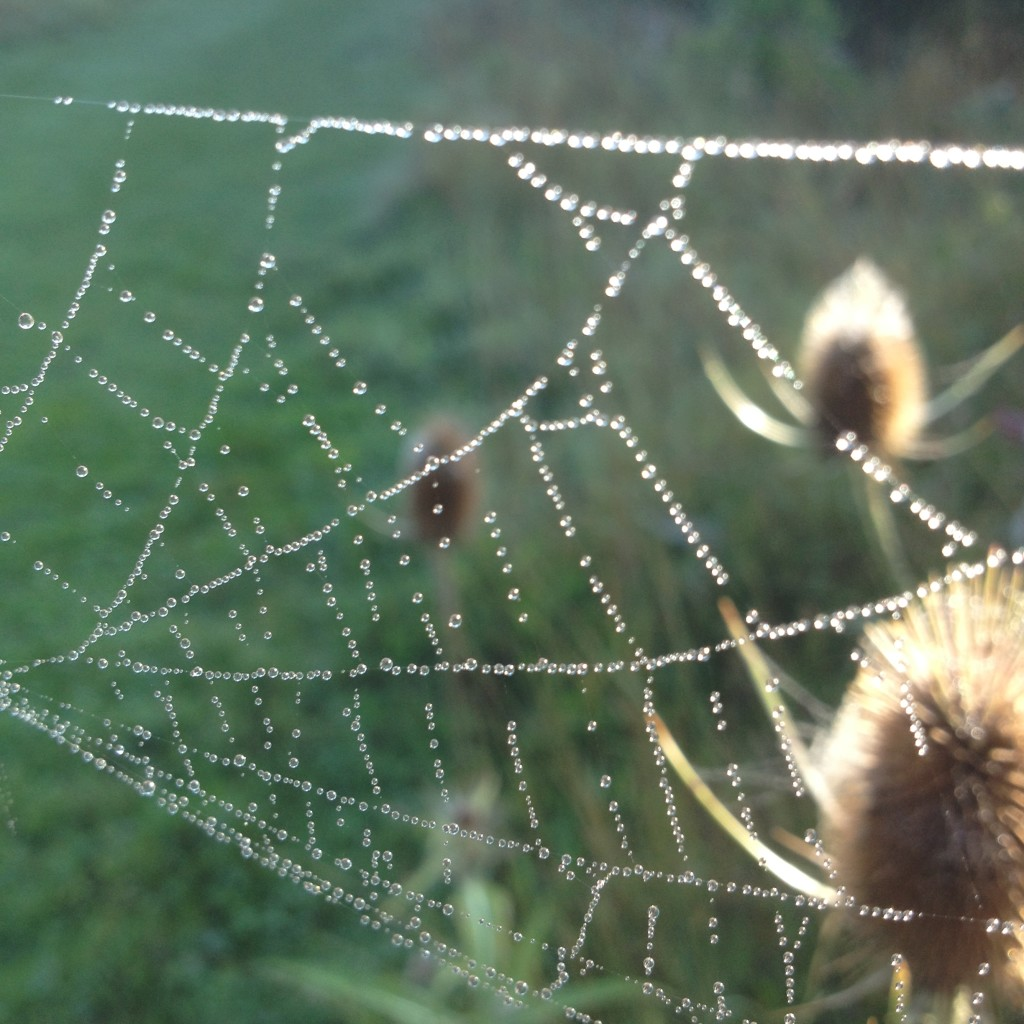 spiders web with dew drop sparkling